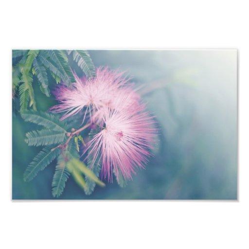 Soft Pastel Flowers Photo Art