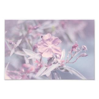 Soft Pastel Lavender Flower Art Photo