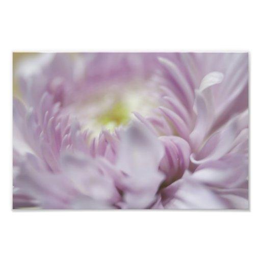 Soft Pastel Lavender Flower Photograph