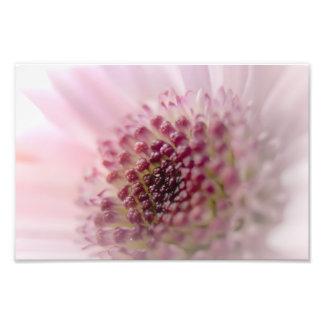 Soft Pastel Pink Flower Close up Photo Art