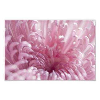 Soft Pastel Pink Flower Close up Photographic Print
