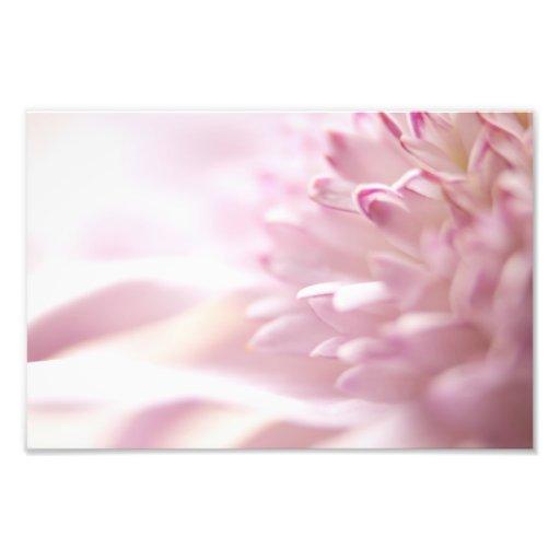Soft Pastel Pink Flower Photo Art