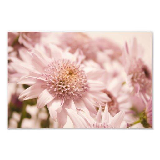 Soft Pastel Pink Flowers Photo