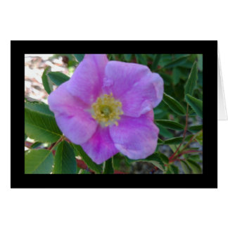 Soft Pink Bloom- Song of Sol. 8:7 Greeting Card