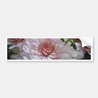 Soft Pink Chrysanthemum Bumper Sticker