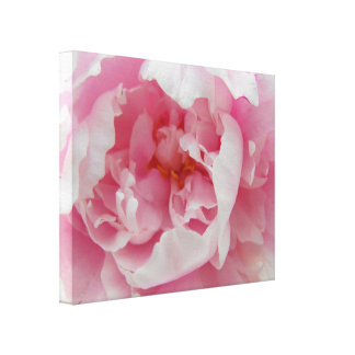 Soft Pink Peony Elegant Photograph on Canvas Gallery Wrap Canvas