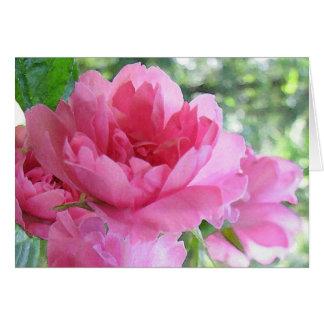 Soft Pink Rose Birthday Card