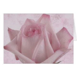 Soft Pink Rose Flower Card