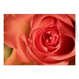 Soft Pink Rose Love You Greeting Card