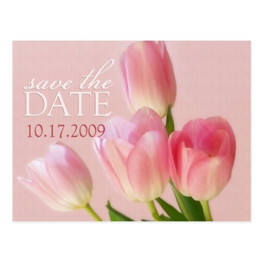 Soft Pink Tulips Save The Date Postcard