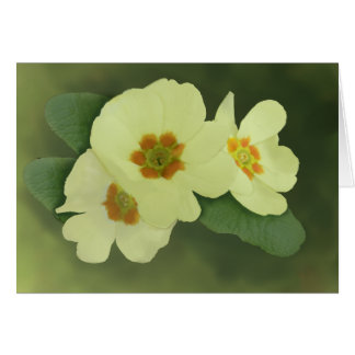 Soft Primrose Flowers Greetings Card