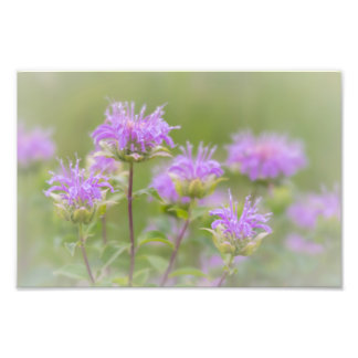 SOFT PURPLE FLOWERS | GOOD EARTH STATE PARK PHOTO