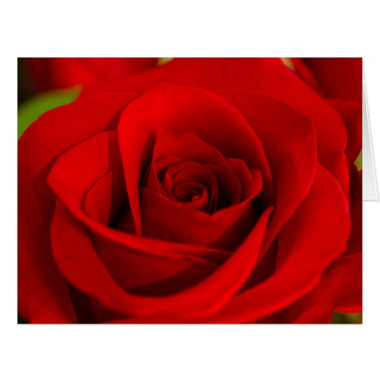 Soft Red Rose Romantic Valentine's Day Large Card