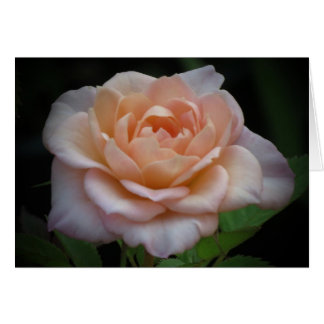 Soft Rose Card