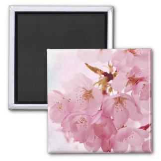 Soft Vintage Pink Cherry Blossoms Square Magnet