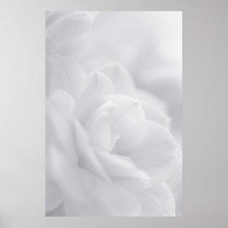 Soft white petals ... poster