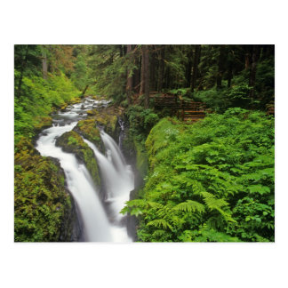 Sol Duc Falls in Olympic National Park in 2 Postcard