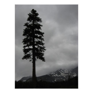 Solitary Pine - Poster