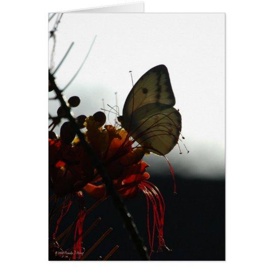 SOLITUDE 5a Card