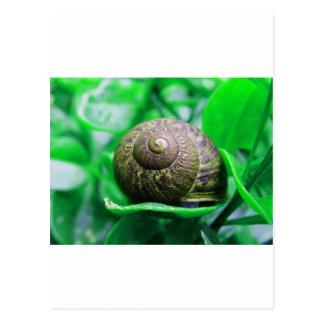 Solitude aka Green Snail Post Cards