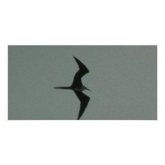 solo bird photo card template