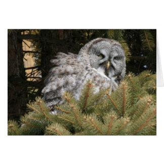 Solstice Card with Great Gray Owl