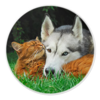 Somali cat and Siberian Husky cute friends huddle Ceramic Knob