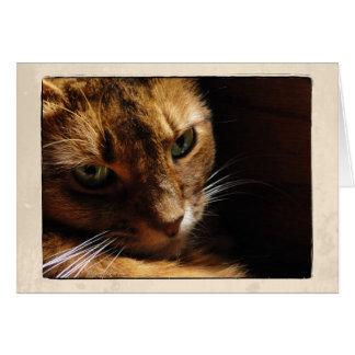 Somali Cat Close Up Card