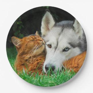 Somali Cat Siberian Husky Cute Friends Huddle Love Paper Plate