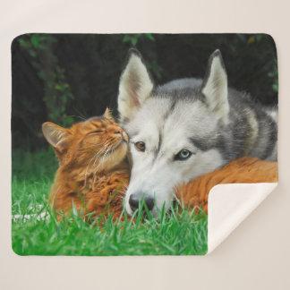 Somali Cat Siberian Husky Cute Friends Huddle Love Sherpa Blanket