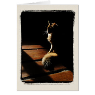 Somali Cat Silhouette Card