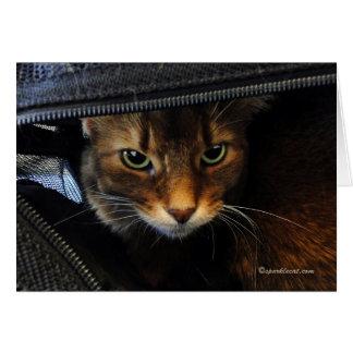 Somali Cat Watching You Card
