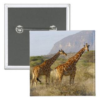 Somali Giraffe, Reticulated Giraffe, Giraffa 15 Cm Square Badge