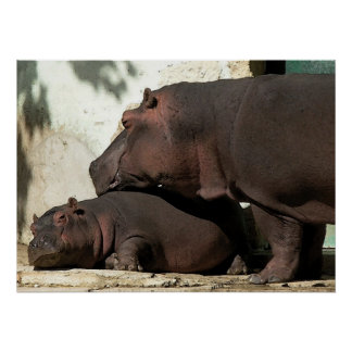 Someone To Watch Over Me Hippopotamus Portrait Poster