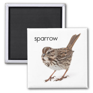 Song Sparrow Magnet