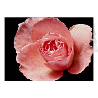 Sonia rose  flowers card
