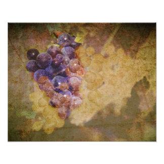 Sonoma Grapes on Vine Photo Art