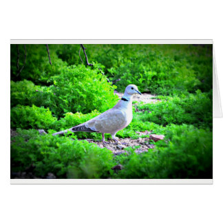 Sonoran Dove Note Card