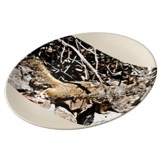 Sonoran Squirrel Porcelain Plate