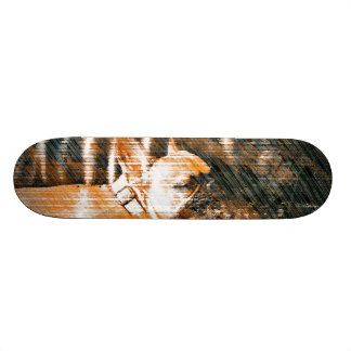 Sophie and Penny the french bulldogs Skate Boards
