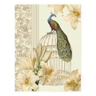 Sophisticated vintage Peacock & Cage Lily Postcard