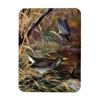 Sora Rails in a Marsh Rectangular Photo Magnet