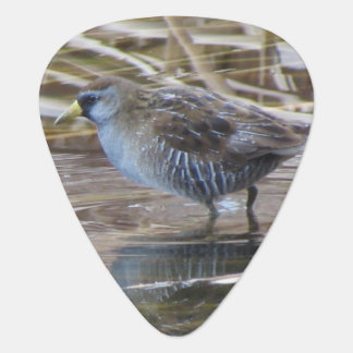 Sora Waterbird Plectrum