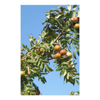 Sorbs in fruit tree . Tuscany, Italy Stationery Design