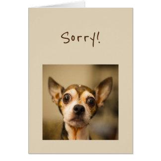 Sorry Belated Birthday Fun Chihuahua Dog Card