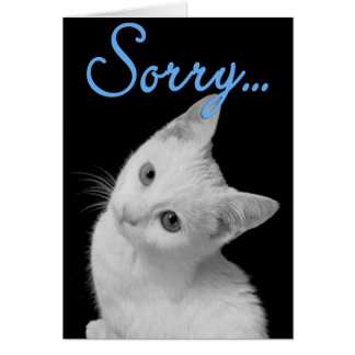 Sorry Cute Turkish Van Kitten Black & White Photo Card