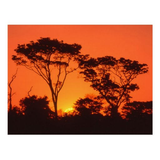 South Africa.  African sunset. Postcard