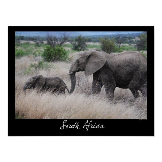 South Africa Elephants Poster