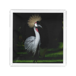 South africa grey crowned crane acrylic tray