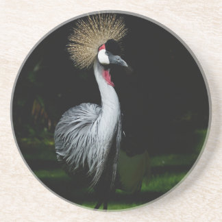 South africa grey crowned crane coaster